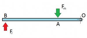 schema-leva-terzo-genere